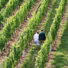 Steiermark - Harkamp Weingartenhotel & Weingut