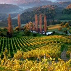 Steiermark - Gamlitz: Weingut Strauss